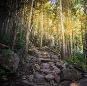 Nature Trail in Colorado
