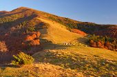 Autumn landscape with colorful forest. Huts in the mountains
