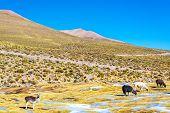 Llama Landscape