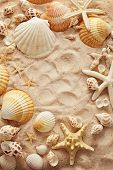 Still life with shells on sand