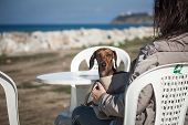 Women With Dachshund Dog On The Sea
