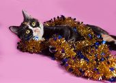 Tricolor Cat Wrapped Christmas Tinsel, Lying On Pink