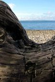 stock photo of driftwood  - Beach framed by an arched piece of driftwood - JPG