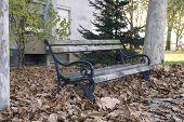 Bench In Fallen Leaves
