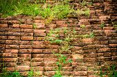 Brick Wall With Grass