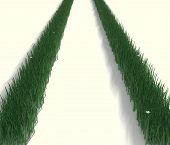 Grass Trax