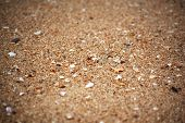 Texture Of Sand And Sea Shells (focus Middle)