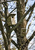 Birdhouses In The Forest
