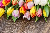 pile  of multicolored  tulips