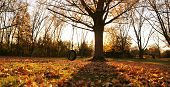 image of tire swing  - Fall tree with tire swing and leaves - JPG