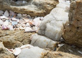 picture of calcite  - Calcite vein in rock at Rocky Point Tangalle Southern Province Sri Lanka Asia - JPG