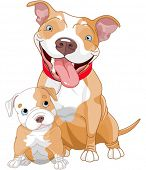 picture of bulls  - Illustration of cute Pit - JPG