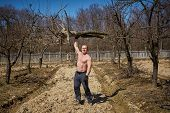 stock photo of orchard  - Powerful man raising an uprooted tree with one arm in an orchard on springtime - JPG