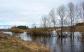 stock photo of backwoods  - Spring flood water fills the lowlands as the spring fills the life of nature after winter - JPG