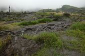 foto of gunung  - Tropical forest destroyed by volcanic eruption on the slopes of Mount Merapi  - JPG