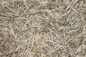 stock photo of bamboo leaves  - Bamboo leaves fall on ground may use as background - JPG