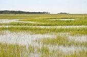 Feuchtgebiet Naturschutz