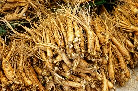 picture of ginseng  - crowd of real ginseng from the North of Korean Republic - JPG