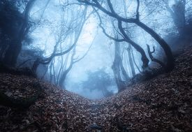picture of crimea  - Trail through a mysterious dark old forest in fog - JPG