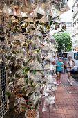 Pet Fish On Sale At Goldfish Market In Hong Kong poster