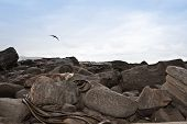 foto of curio  - Wild Sea Lion resting on rocks - JPG