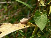 Reptiles  Spring Peeper Frog 001