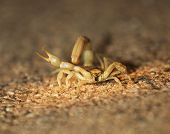Friendly Scorpion