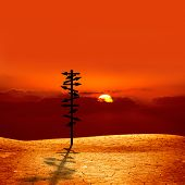 conceptual image of silhouetted directional sign on cracked dry landscape over sunset  poster