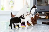 Cute kittens looking with curiosity in apartment poster