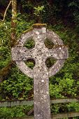 picture of irish moss  - an old celtic cross in waterford ireland