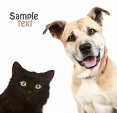 Cat And Dog On White poster
