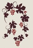 Grape vines silhouettes set.
