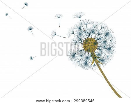 poster of Dandelion Background For Your Design. The Wind Blows Dandelion Seeds. Template For Posters, Wallpape