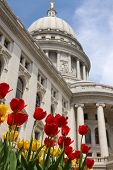 Wisconsin State Capitol Building Spring View With Flower Bed With Bright Tulips On A Foreground. Cit poster