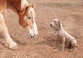 Big horse and a dog