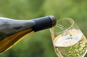 White Wine Pouring From The Bottle Into The Glass On Green Nature Blurred Background. Concept Of Cel poster