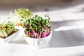 Microgreen Kress, Pink Radish Sprouts On White Wooden Background In Trendy Hard Direct Sunlight, Dee poster