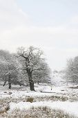 Winterlandschaft der Richmond Park