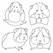 Sketches Of Different Guinea Pigs Sketches On White Background. Set Of Drawn Guinea Pigs By Free Han poster