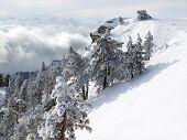 Árvores de pinheiros cobertos de neve na montanha.