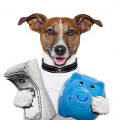 image of piggy  - money dog holding a blue piggy bank - JPG