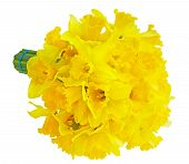 picture of lent  - Narcissus Daffodil Lent Lily flower bouquet isolated on white