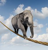 stock photo of roping  - Managing risk and big business challenges and uncertainty with a large elephant walking on a dangerous rope high in the sky as a symbol of balance and overcoming fear for goal success - JPG