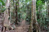 Rainforest Path 1