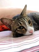 Cat Lying On Sheet