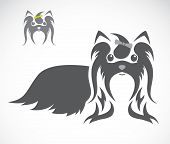 picture of dog breed shih-tzu  - Vector image of an shih tzu dog on white background - JPG