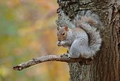 Squirrel with Autumn Colors