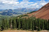foto of wolverine  - Forested Slope in the San Juan Mountains - JPG