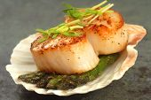 stock photo of scallops  - Delicious pan seared sea scallop with asparagus and pea shoots served on a scallop shell - JPG