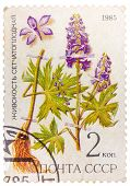 Post Stamp Printed In Ussr (cccp, Soviet Union) Shows Plant Of Delphinium Dictyocaryum